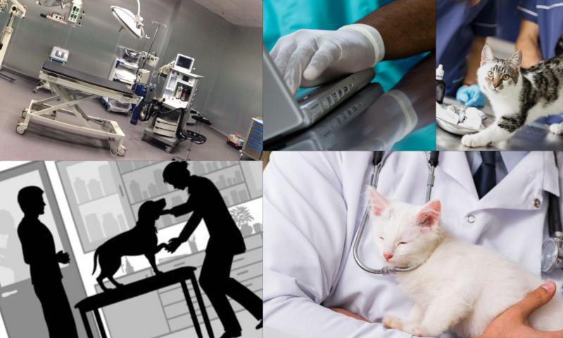 Veteriner Aşı Takip Programı Almak İçin Ne Yapılmalıdır?