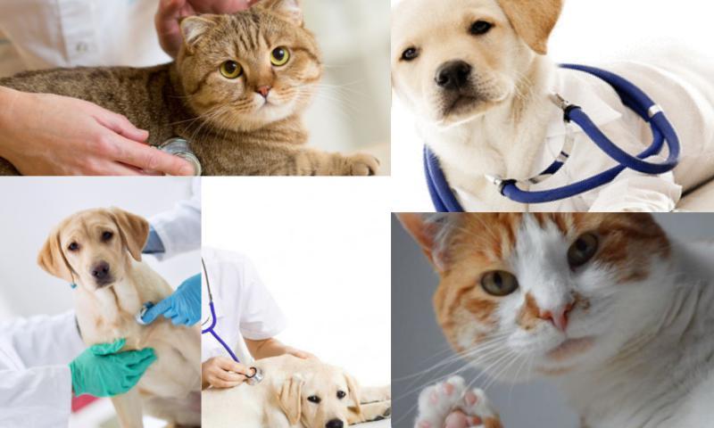 Veteriner Pet Takip Sistemi