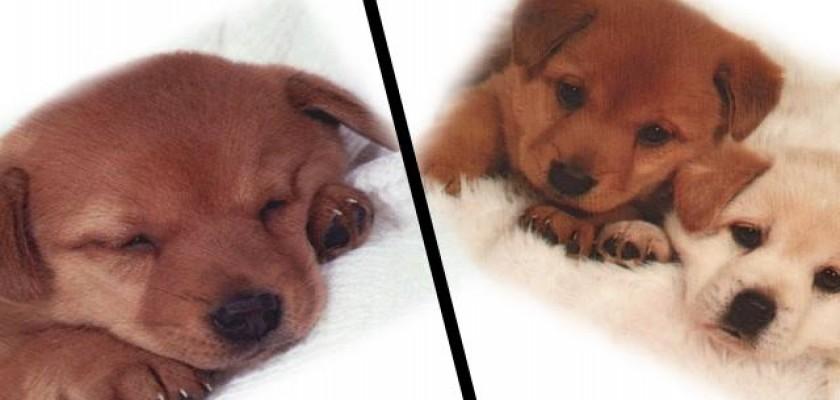 Kaç Çeşit Köpek Maması Bulunmaktadır
